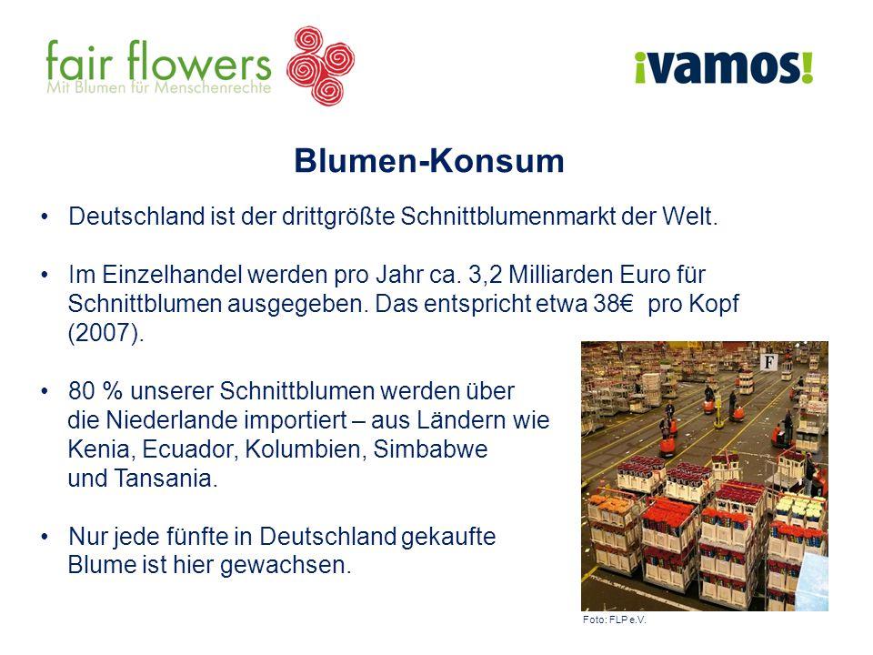 Blumen-Konsum Deutschland ist der drittgrößte Schnittblumenmarkt der Welt. Im Einzelhandel werden pro Jahr ca. 3,2 Milliarden Euro für.