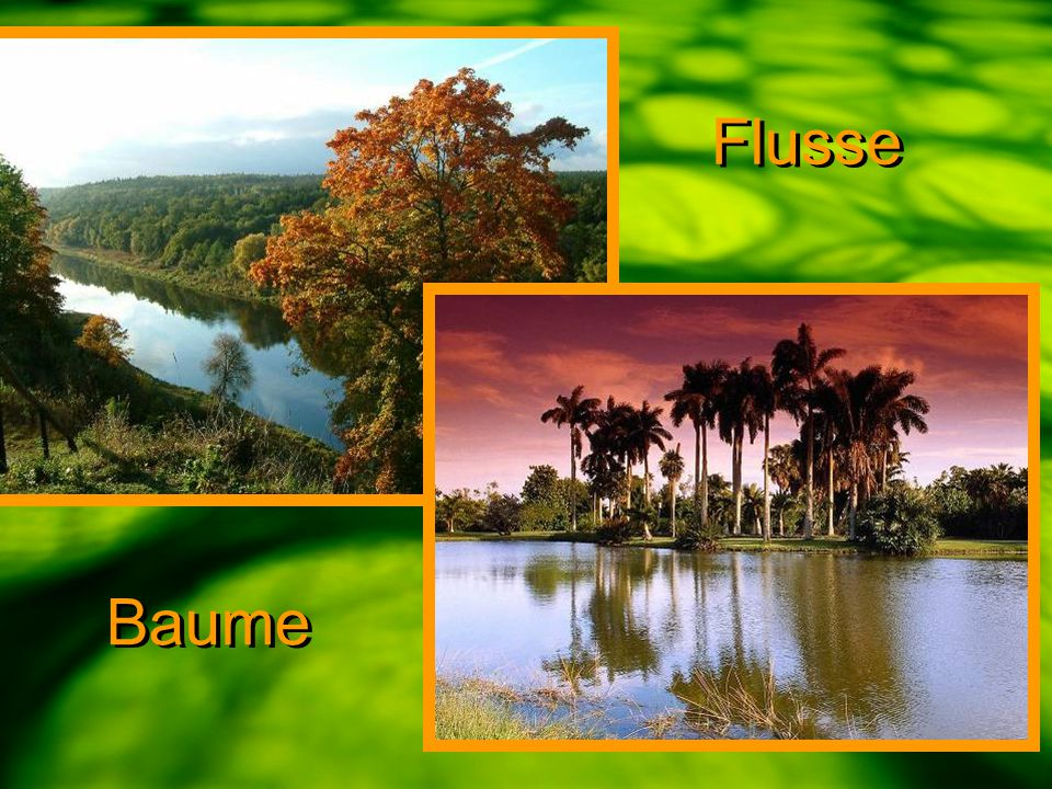 Flusse Baume