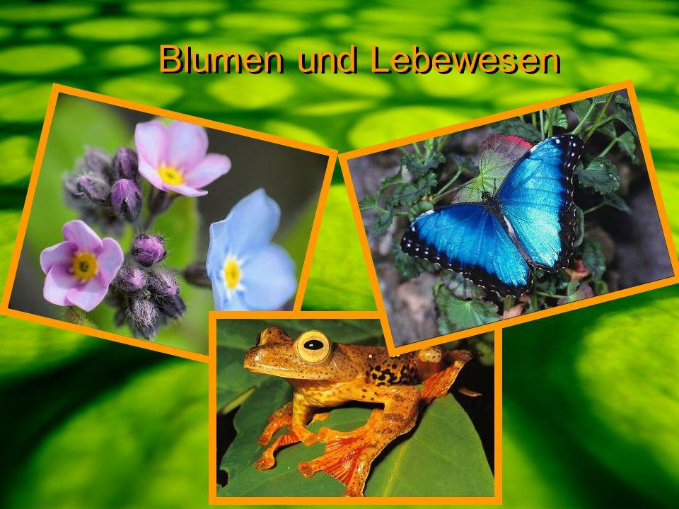 Blumen und Lebewesen