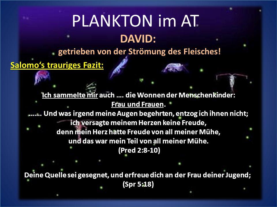 PLANKTON im AT DAVID: getrieben von der Strömung des Fleisches!