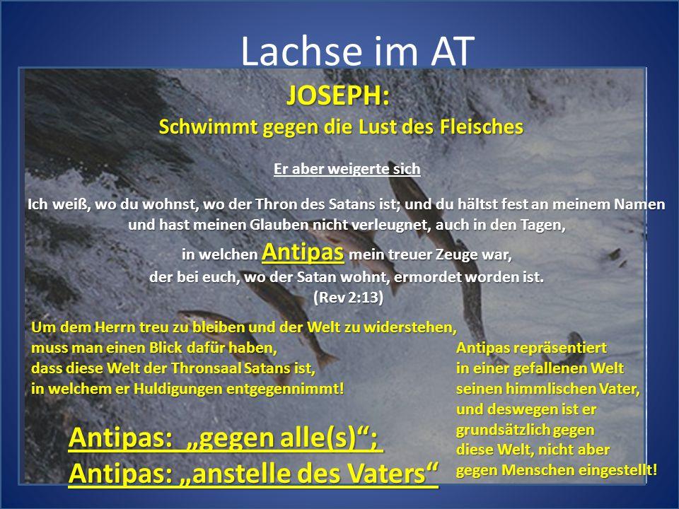 """Lachse im AT JOSEPH: Antipas: """"gegen alle(s) ;"""