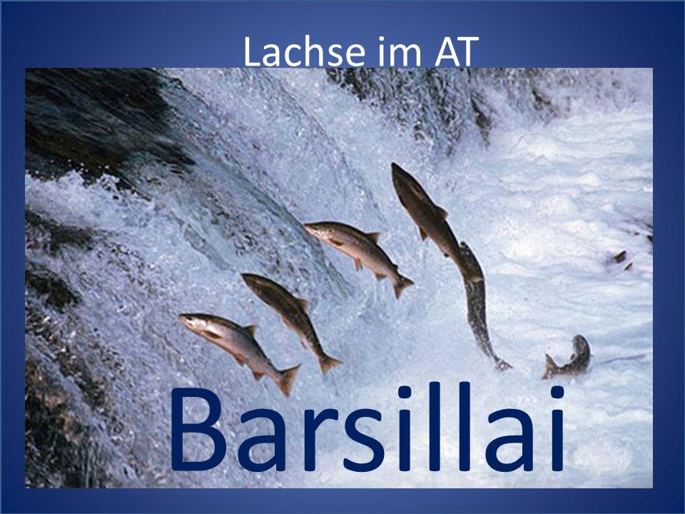 Lachse im AT Barsillai