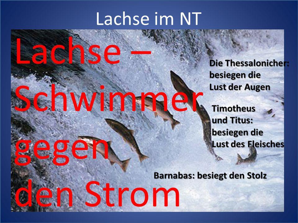 Lachse – Schwimmer gegen den Strom Lachse im NT Die Thessalonicher: