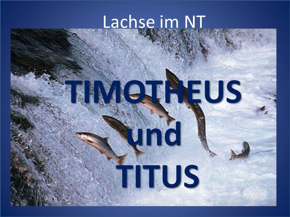 Lachse im NT TIMOTHEUS und TITUS