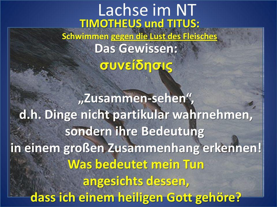 """Lachse im NT Das Gewissen: συνείδησις """"Zusammen-sehen ,"""