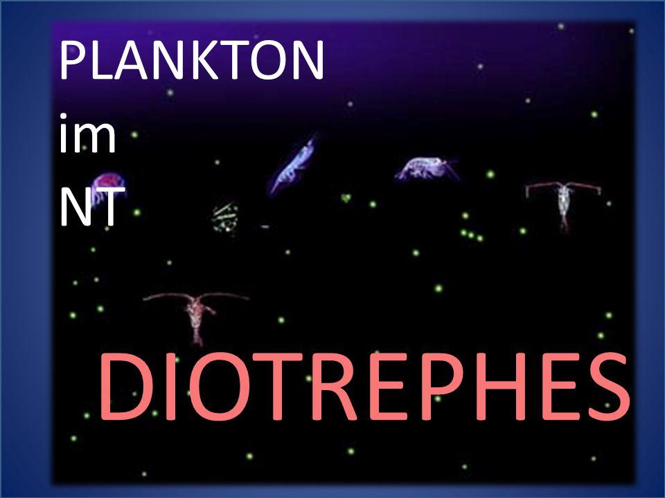 PLANKTON im NT DIOTREPHES