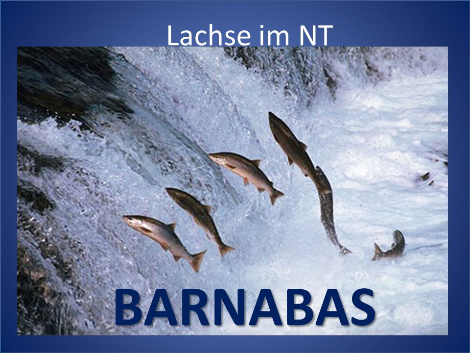 Lachse im NT BARNABAS