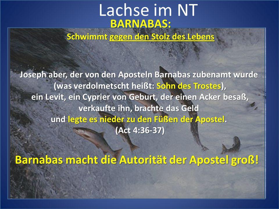 Lachse im NT BARNABAS: Barnabas macht die Autorität der Apostel groß!
