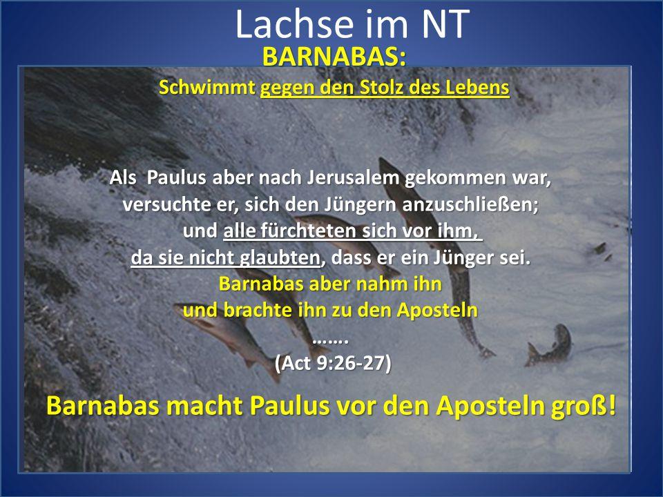 Lachse im NT BARNABAS: Barnabas macht Paulus vor den Aposteln groß!