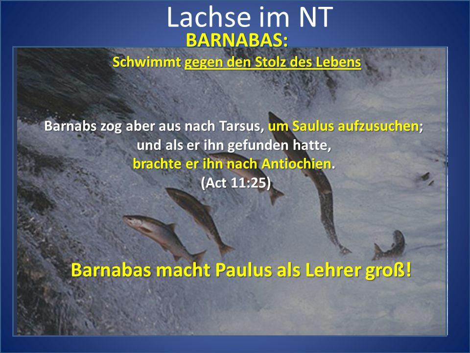 Lachse im NT BARNABAS: Barnabas macht Paulus als Lehrer groß!