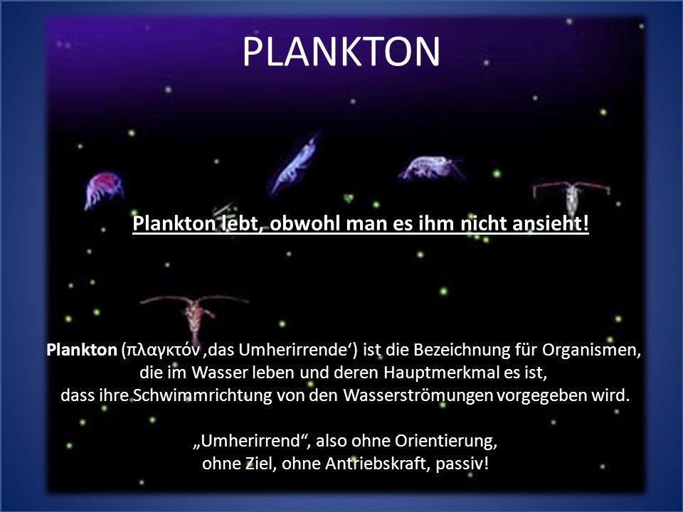 Plankton lebt, obwohl man es ihm nicht ansieht!