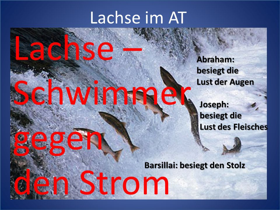 Lachse – Schwimmer gegen den Strom Lachse im AT Abraham: besiegt die