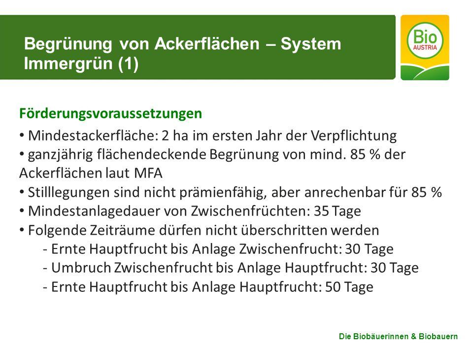 Begrünung von Ackerflächen – System Immergrün (1)