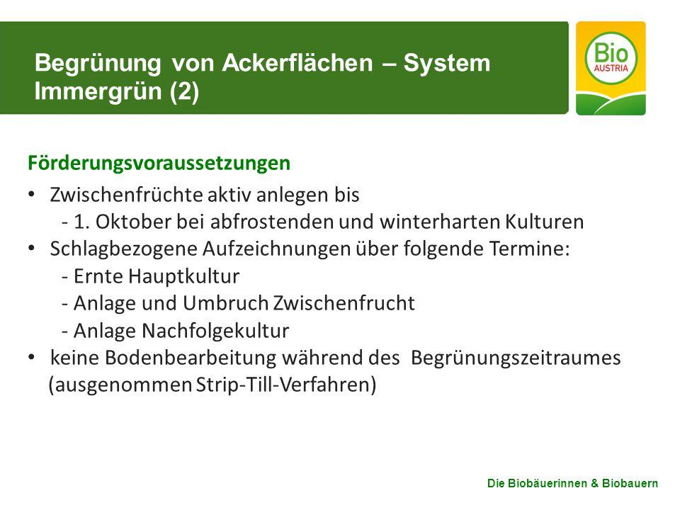 Begrünung von Ackerflächen – System Immergrün (2)