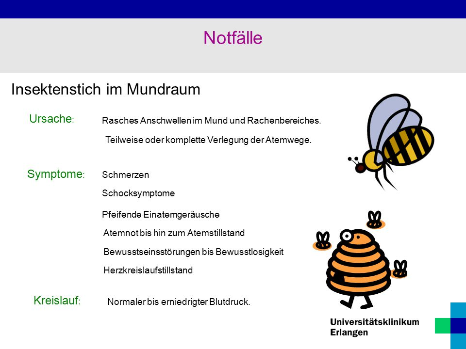 Notfälle Insektenstich im Mundraum Ursache: Symptome: Kreislauf: