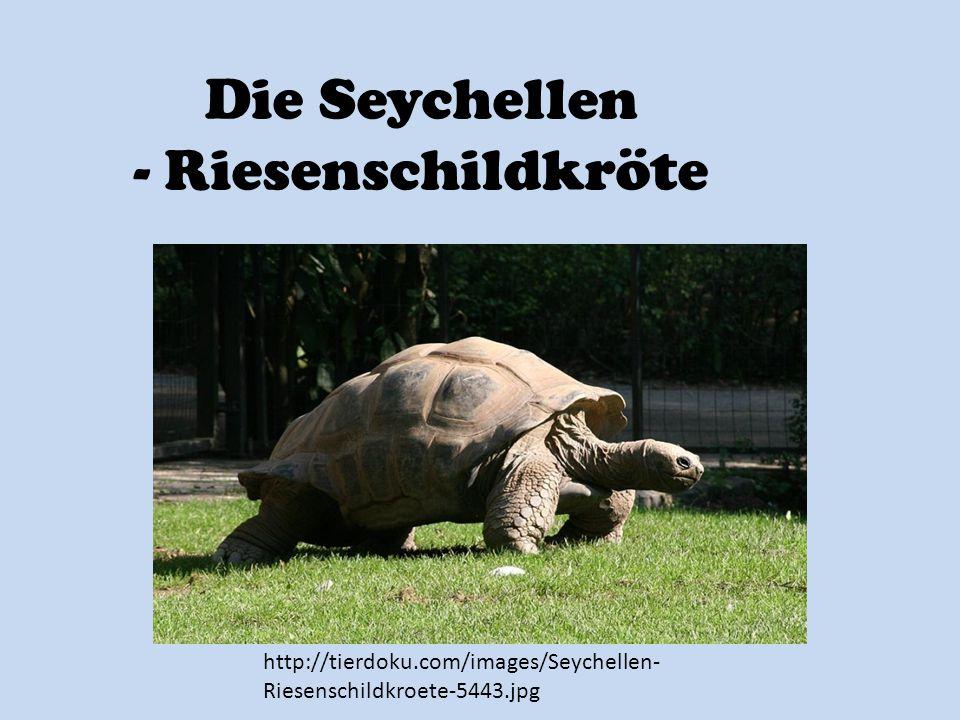 Die Seychellen - Riesenschildkröte