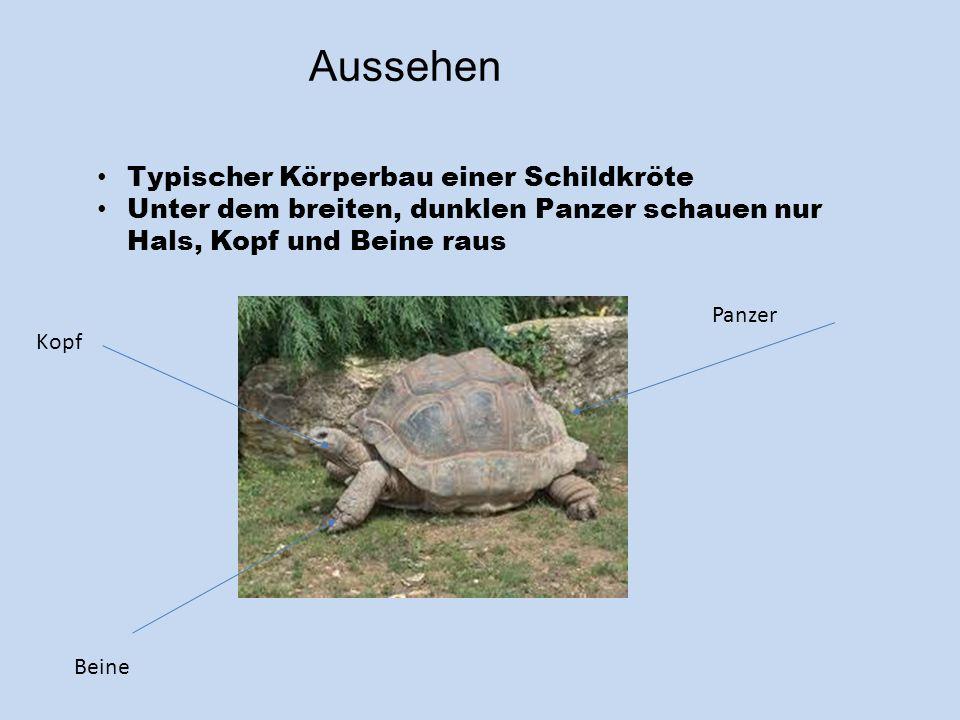 Aussehen Typischer Körperbau einer Schildkröte