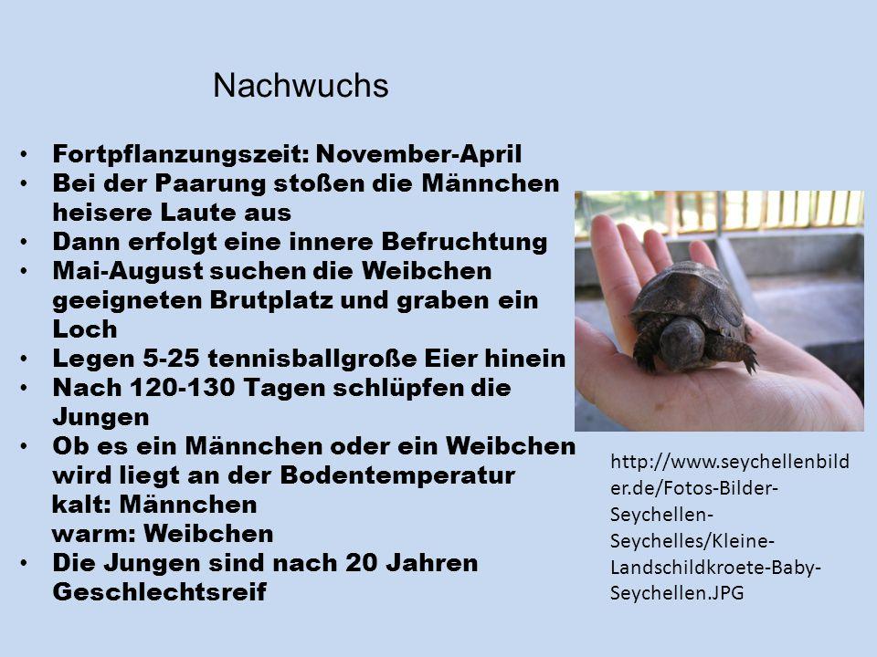 Nachwuchs Fortpflanzungszeit: November-April
