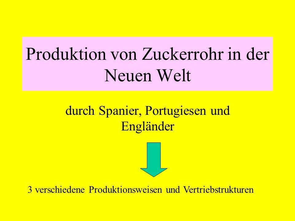 Produktion von Zuckerrohr in der Neuen Welt