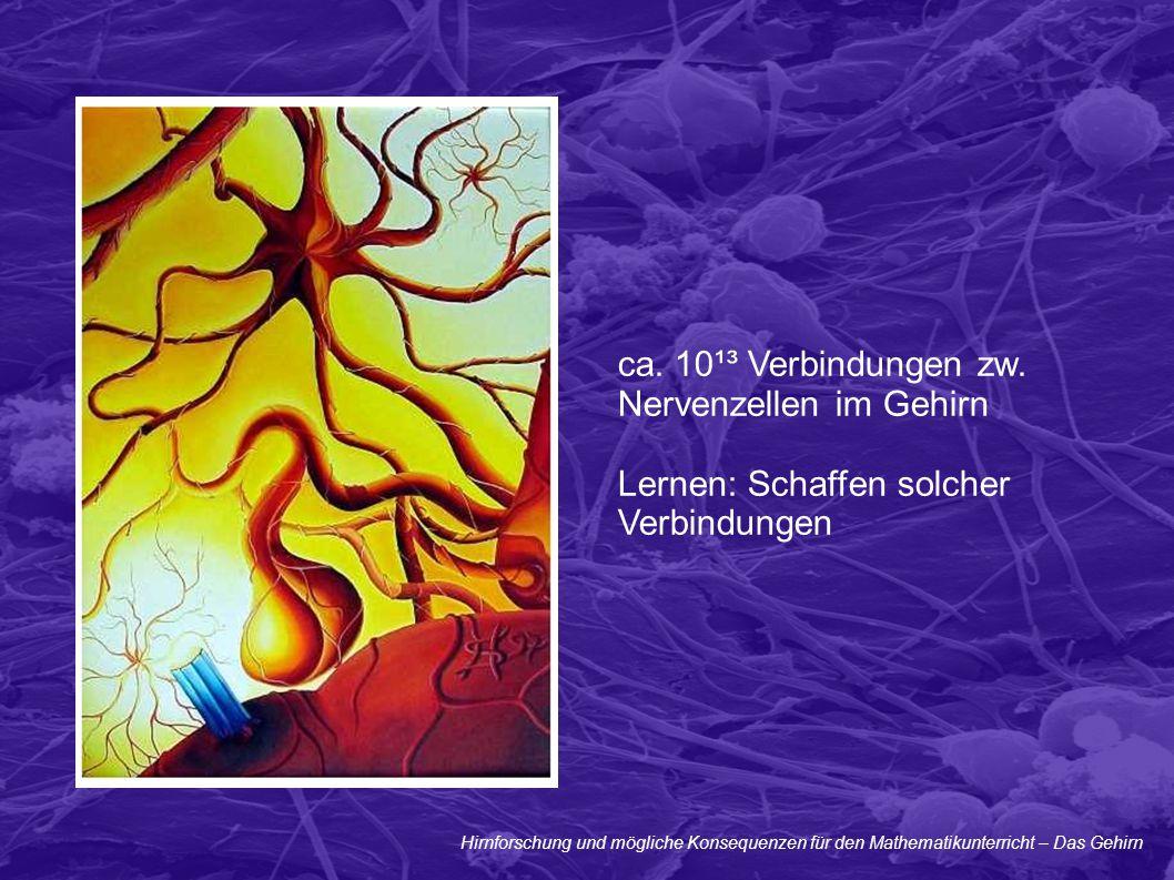 Nervenzellen im Gehirn Lernen: Schaffen solcher Verbindungen