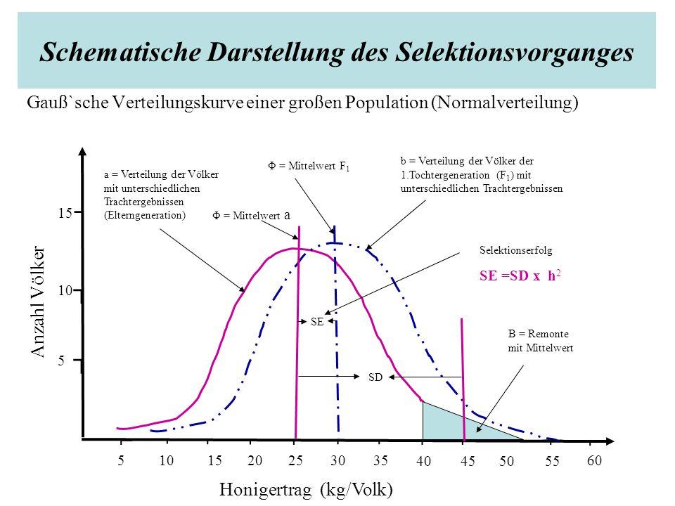 Schematische Darstellung des Selektionsvorganges