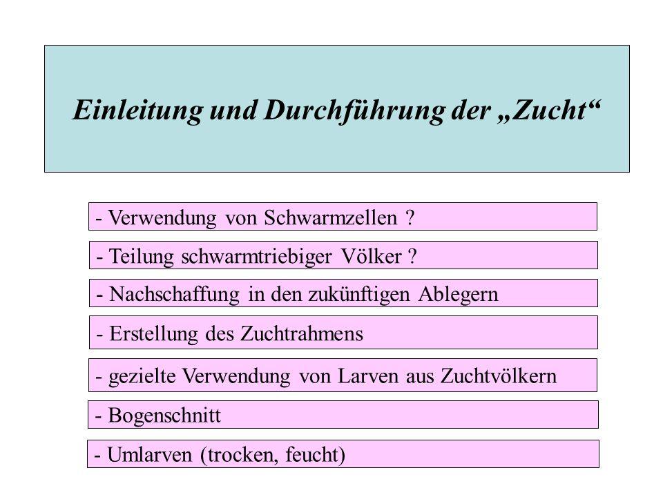 """Einleitung und Durchführung der """"Zucht"""