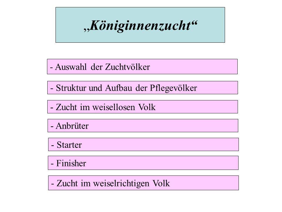 """""""Königinnenzucht - Auswahl der Zuchtvölker"""