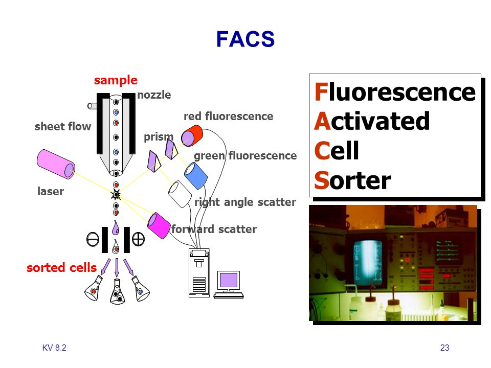 Fluorescence Activated Cell Sorter FACS sample sorted cells nozzle