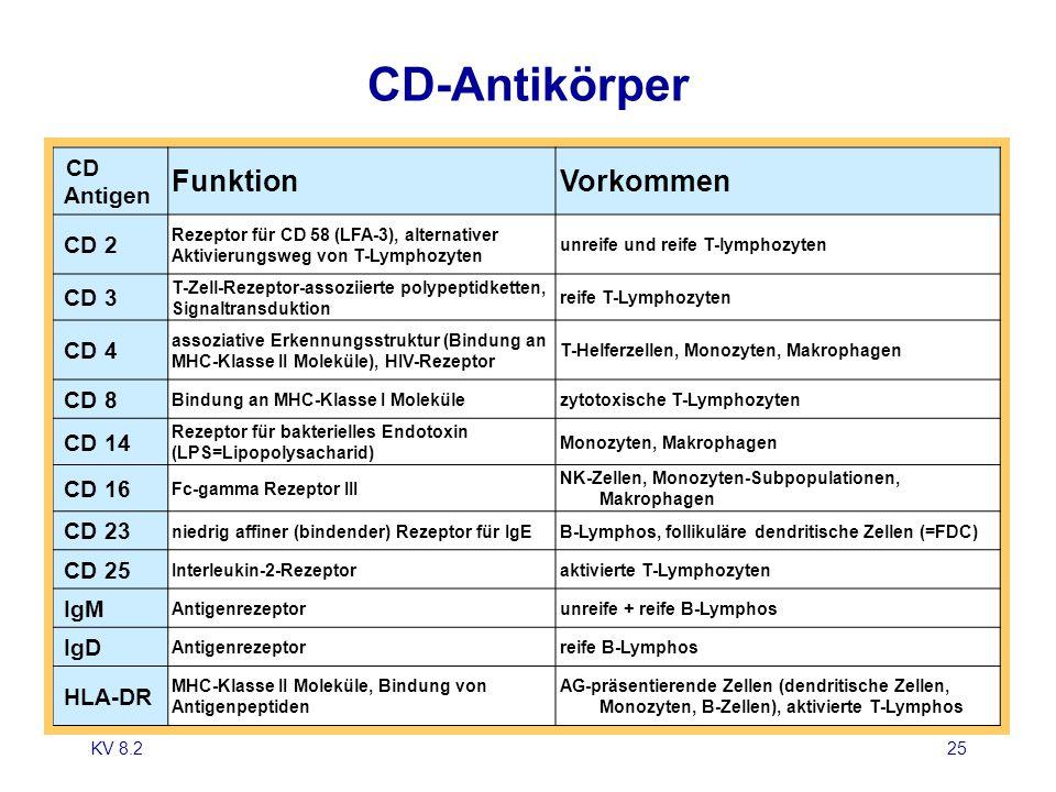 CD-Antikörper Funktion Vorkommen CD Antigen CD 2 CD 3 CD 4 CD 8 CD 14