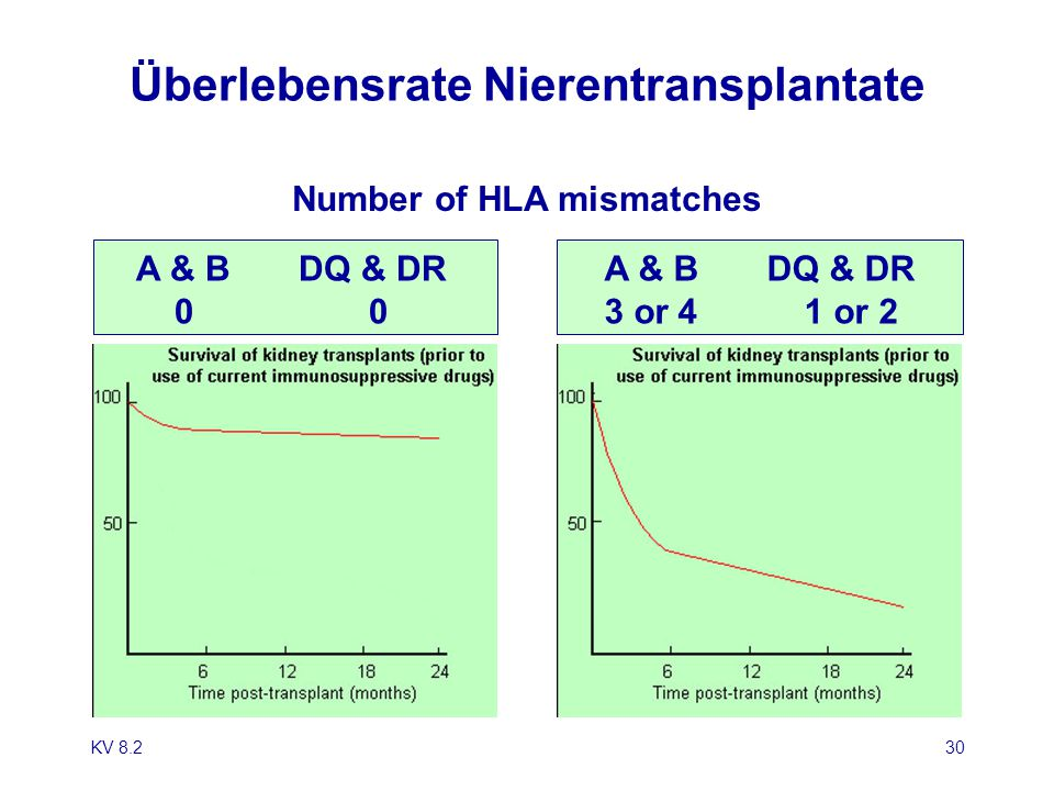 Überlebensrate Nierentransplantate
