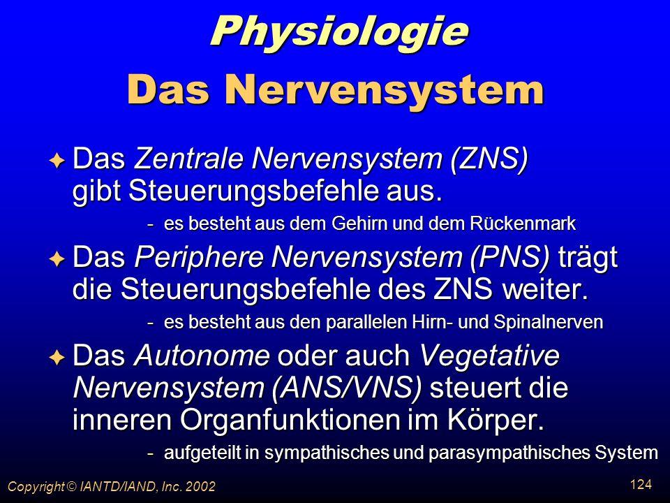 Physiologie Das Nervensystem