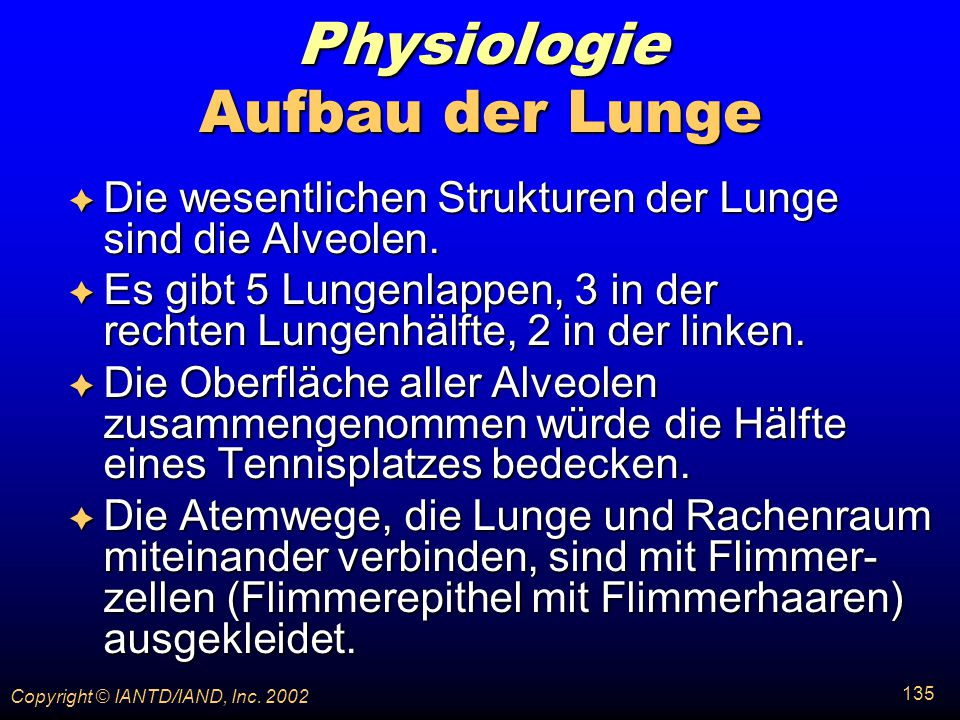 Physiologie Aufbau der Lunge