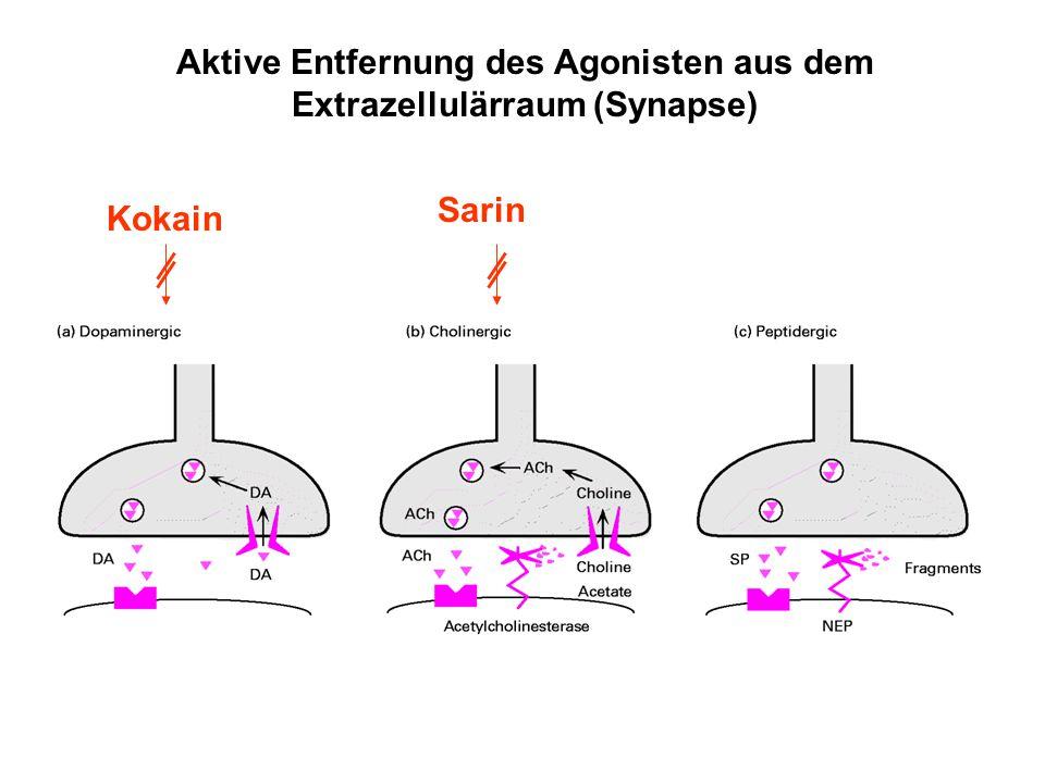 Aktive Entfernung des Agonisten aus dem Extrazellulärraum (Synapse)