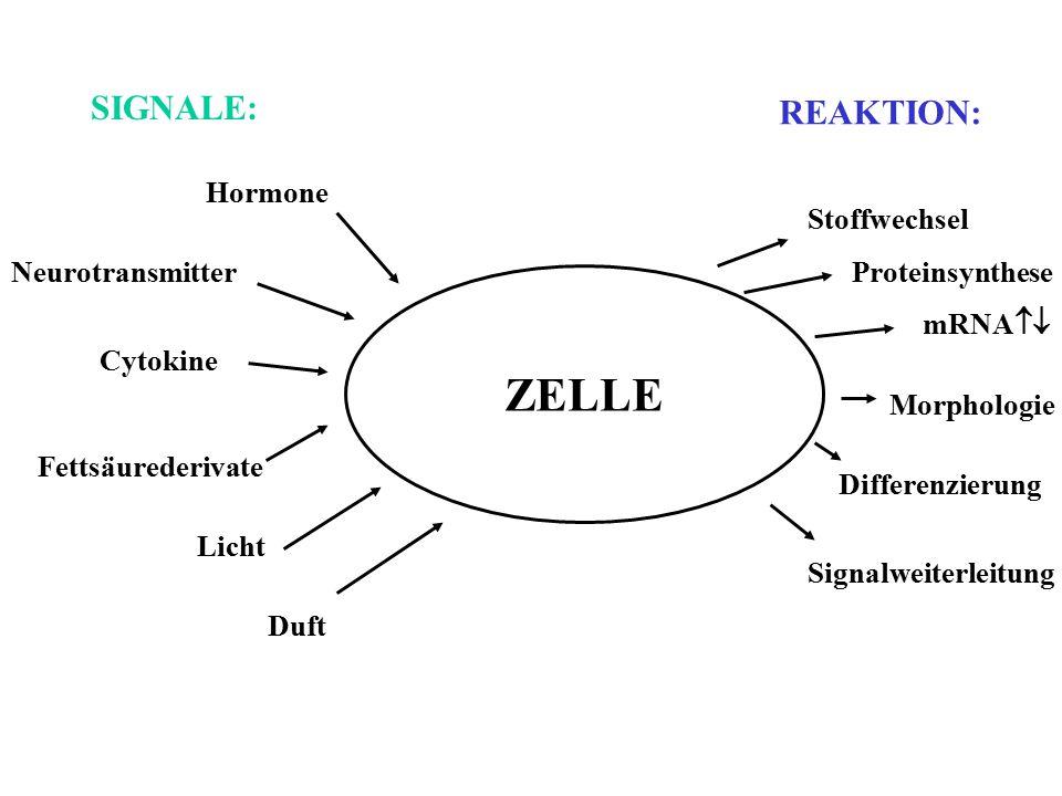 ZELLE SIGNALE: REAKTION: Hormone Stoffwechsel Neurotransmitter