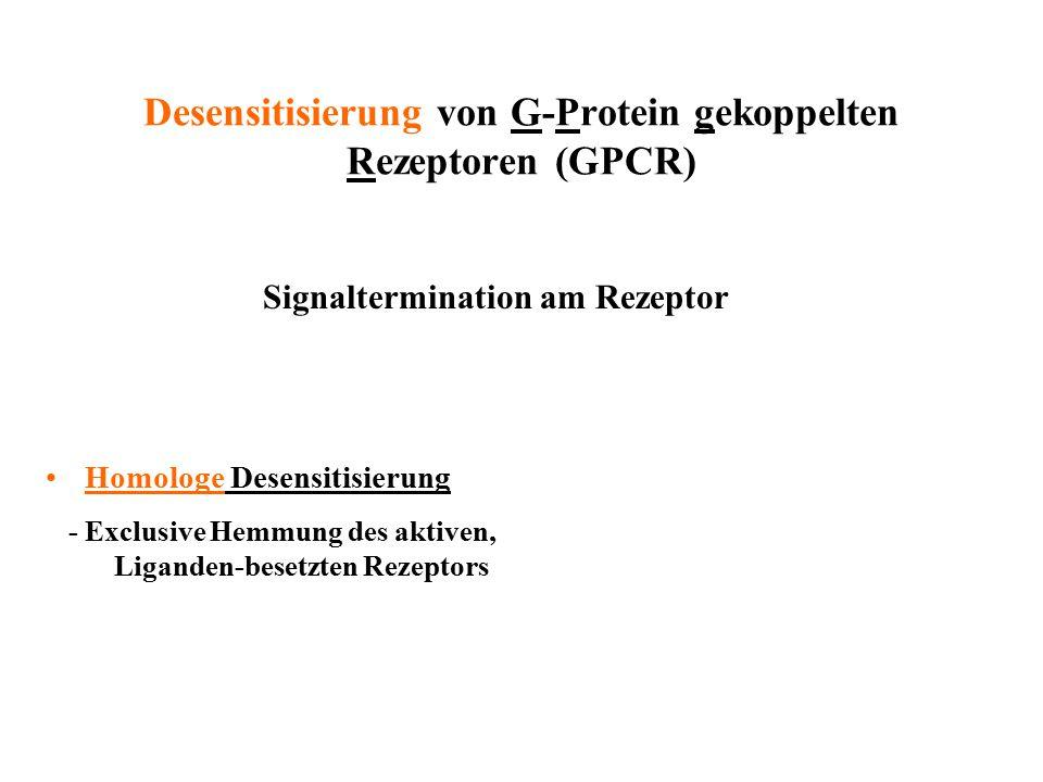 Desensitisierung von G-Protein gekoppelten Rezeptoren (GPCR)