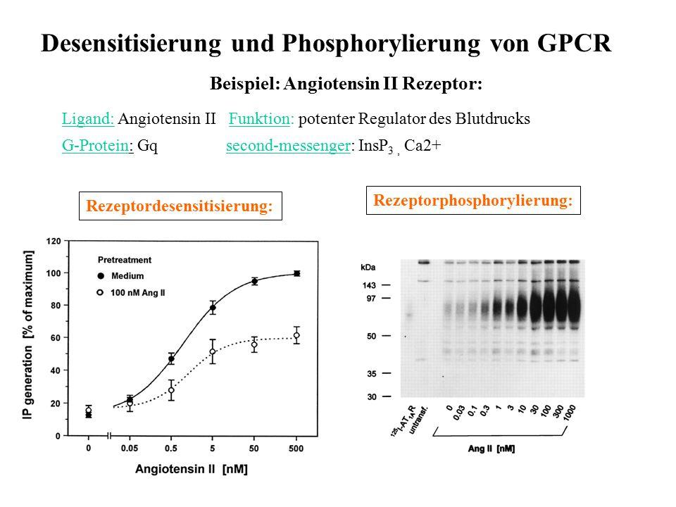 Desensitisierung und Phosphorylierung von GPCR