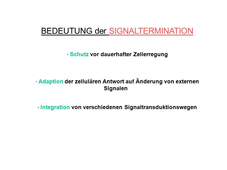 BEDEUTUNG der SIGNALTERMINATION