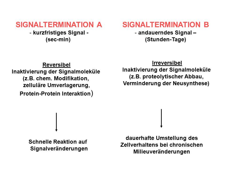 SIGNALTERMINATION A SIGNALTERMINATION B