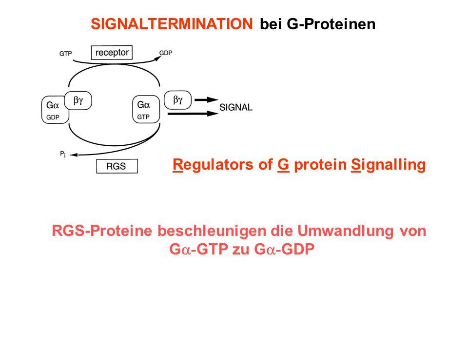 RGS-Proteine beschleunigen die Umwandlung von