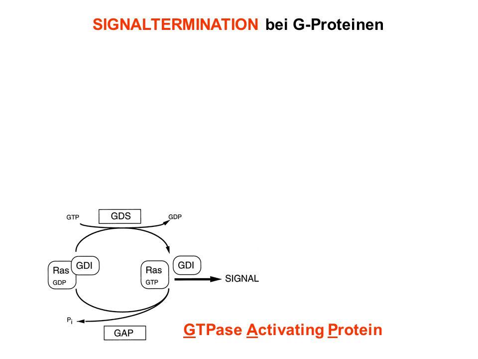 SIGNALTERMINATION bei G-Proteinen