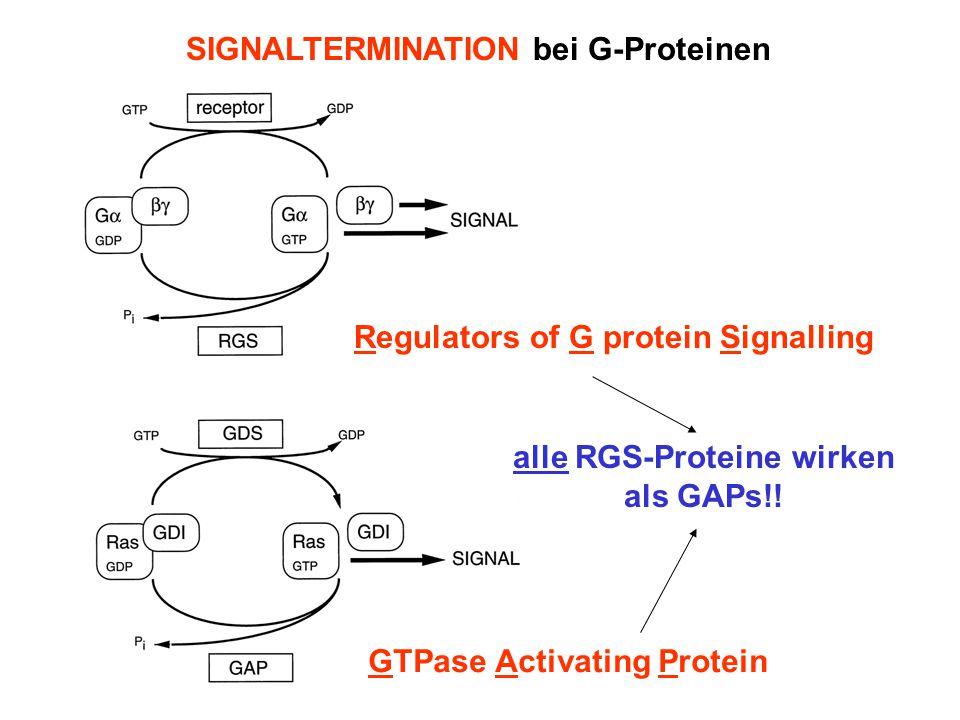 alle RGS-Proteine wirken