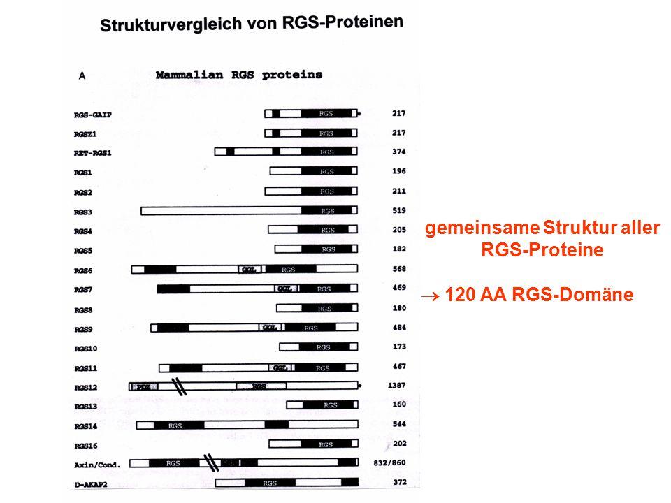 gemeinsame Struktur aller RGS-Proteine
