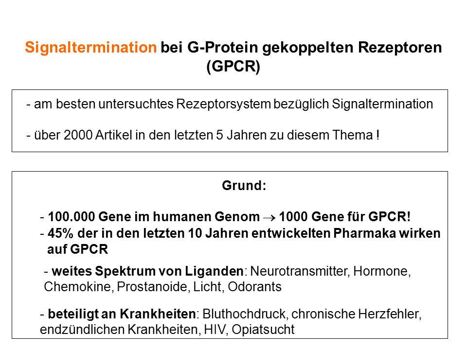 Signaltermination bei G-Protein gekoppelten Rezeptoren