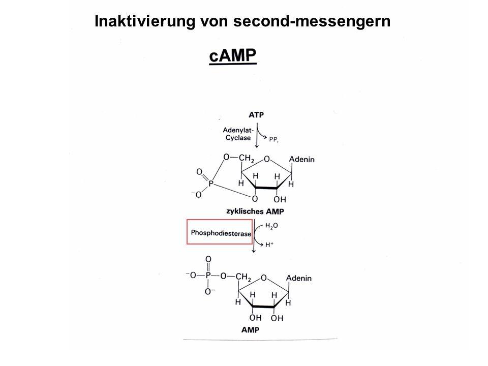 Inaktivierung von second-messengern