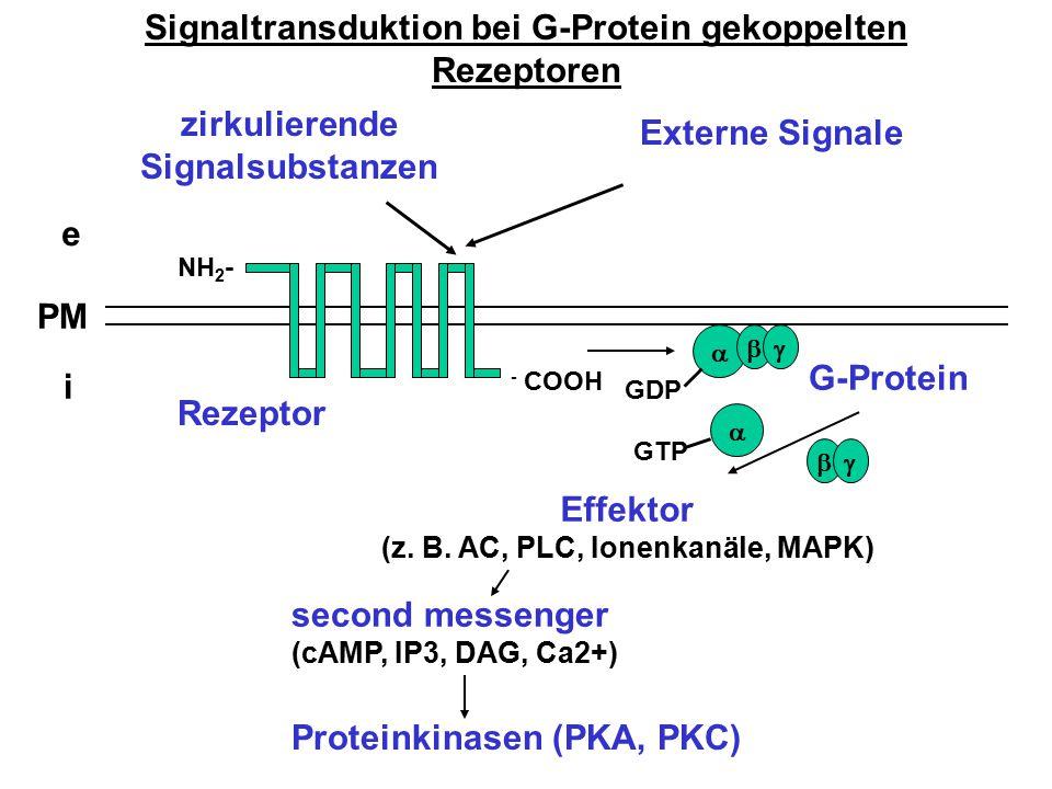 Signaltransduktion bei G-Protein gekoppelten Rezeptoren