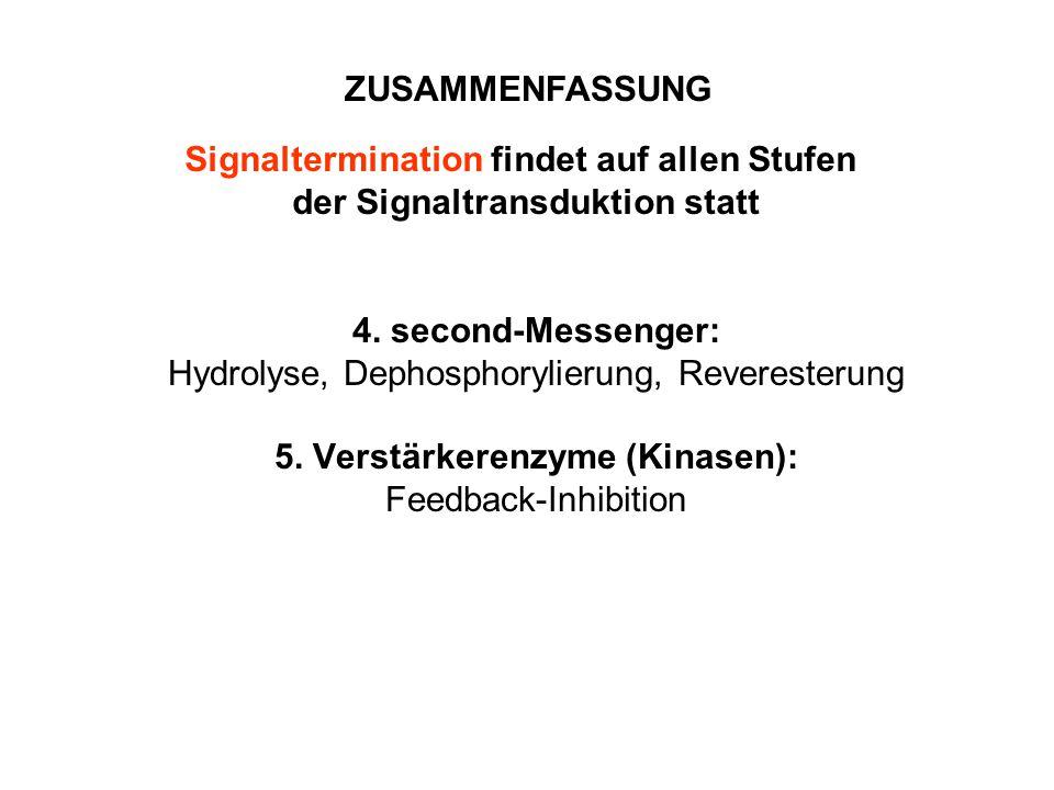 Signaltermination findet auf allen Stufen der Signaltransduktion statt
