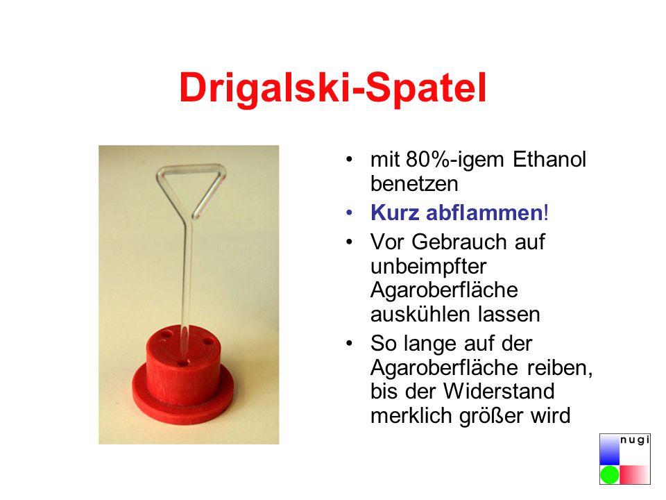 Drigalski-Spatel mit 80%-igem Ethanol benetzen Kurz abflammen!