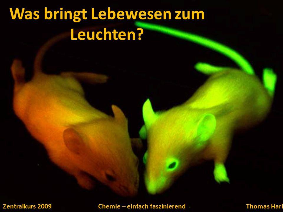 Was bringt Lebewesen zum Leuchten