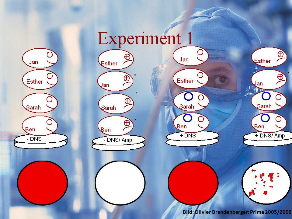 Resultate GFP Experimente/Idee Resultate Kosten