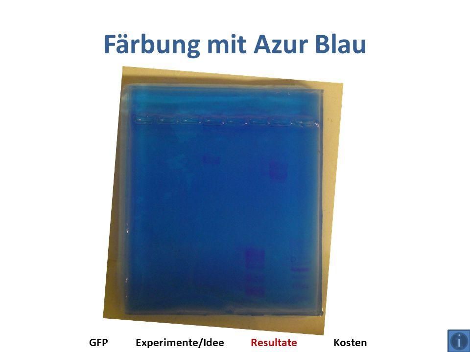 Färbung mit Azur Blau GFP Experimente/Idee Resultate Kosten